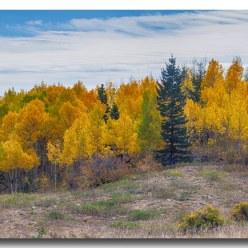 Autumn SeasoAspen Panorama Scenic View