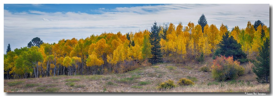 Autumn SeasoAspen Panorama Scenic View