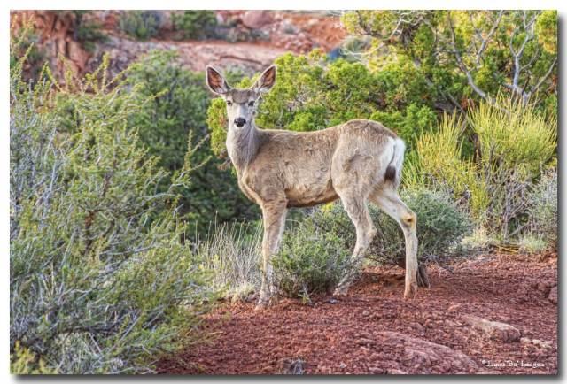 Deer Stare Down Art Print