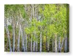 Getting Lost In The Wilderness Canvas Print