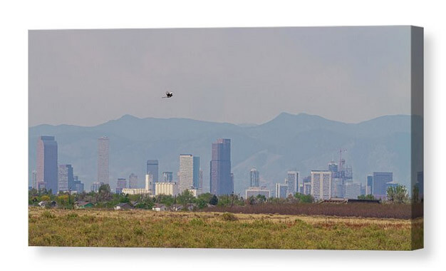 Denver Colorado Pretty Bird Fly By Canvas Print