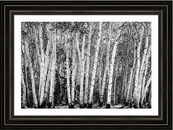 Pillars Of The Wilderness Framed Print