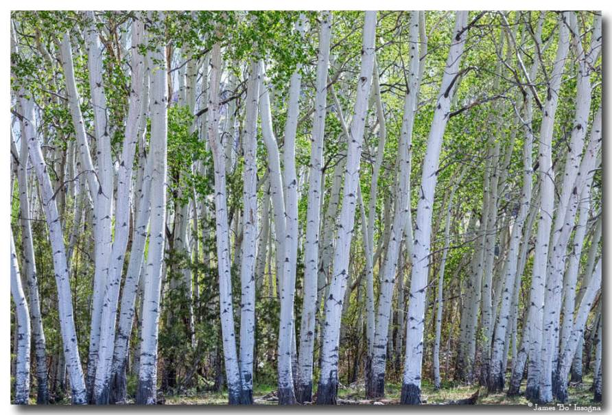 White Wilderness Art Prints