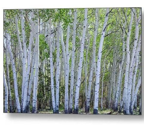 White Wilderness Metal Print