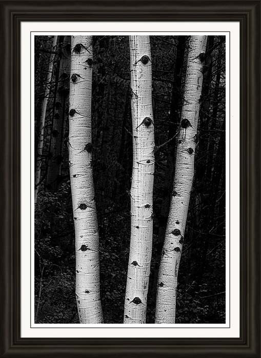 Nature_Coming_Out_Of_Darkness_Framed_Print