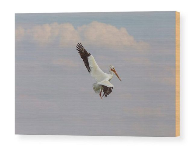 Pelican On The Hunt Wood Print