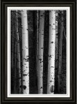 Monochrome Wilderness Wonders Framed Print