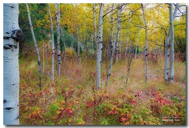 Fall Foliage Forest Delight Landscape Art Print