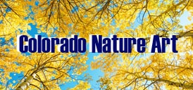 Nature Comes to Life In Boulder Colorado – Video