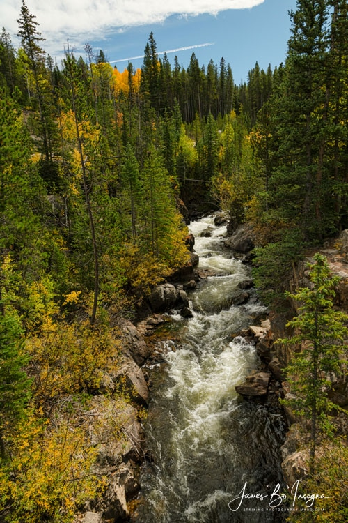 Rocky Mountain Autumn Stream Portrait Art Print