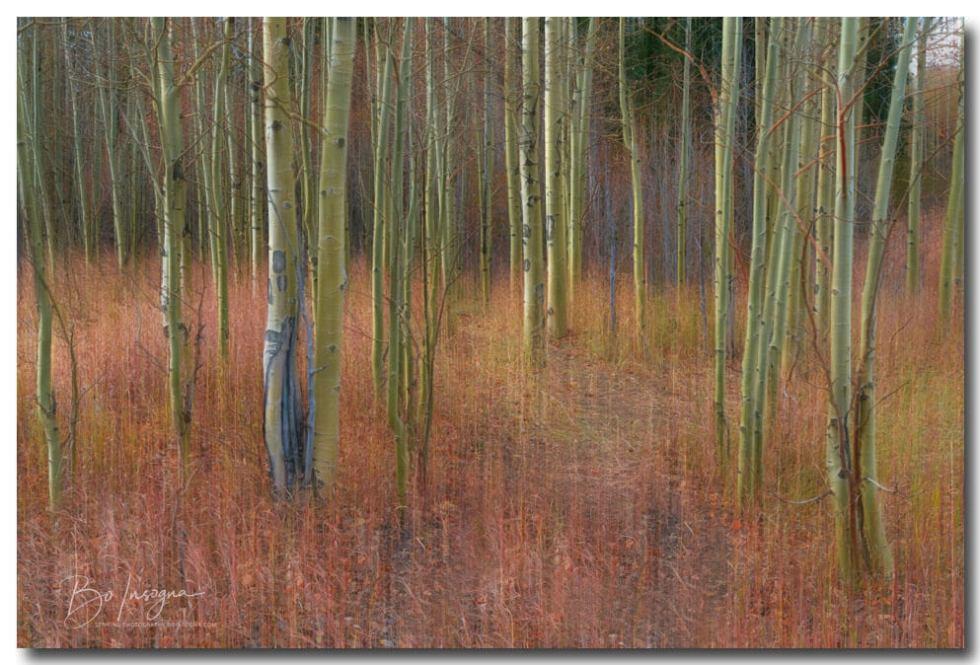 Soothing Wilderness Wonder Art Print