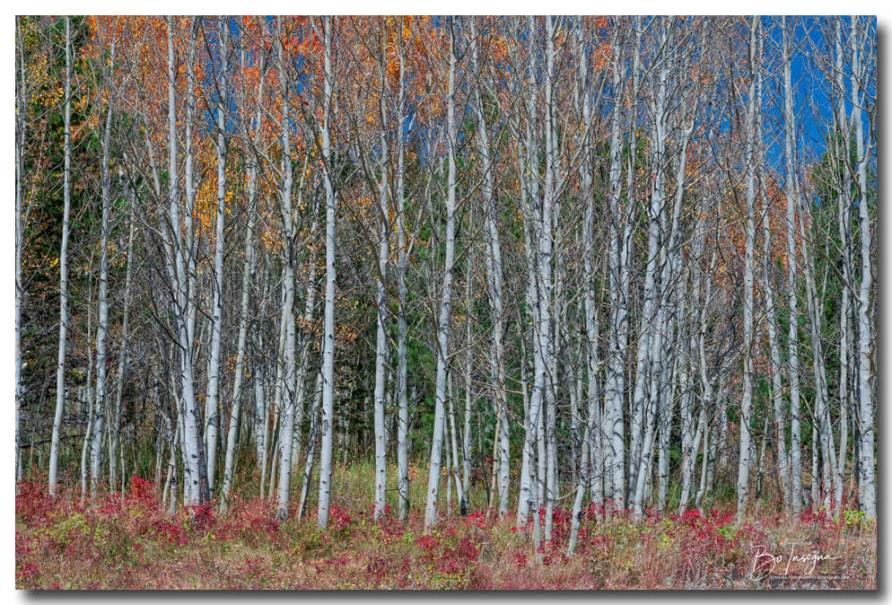 Red Orange Blue Stick Forest Art Print
