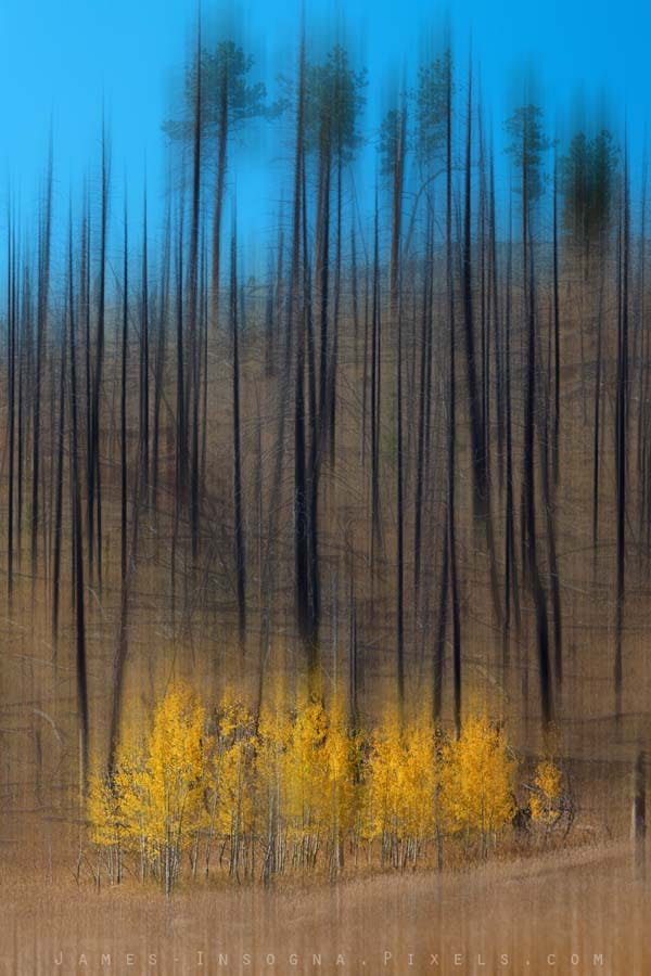 Aspen Forest Burnout Abstract Art  Print