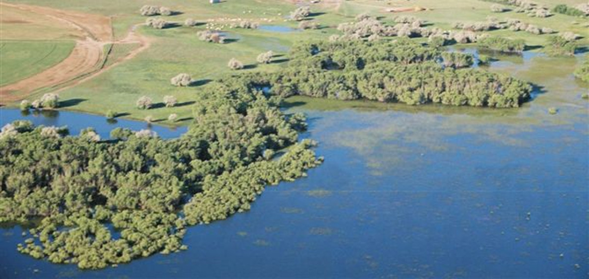 COL and Ducks Unlimited to enhance waterfowl habitat along Prewitt Reservoir!
