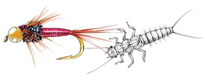 COPPER JOHN illustration. copyright Marjorie Leggit