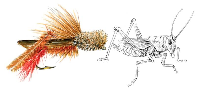 Hopper illustration. COPYRIGHT MARJORIE LEGGIT