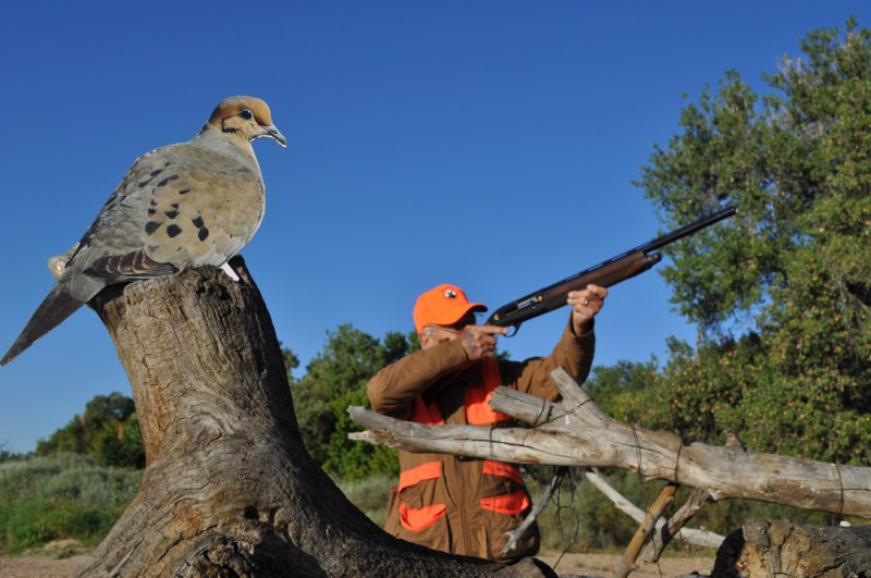 Dove hunter with decoy