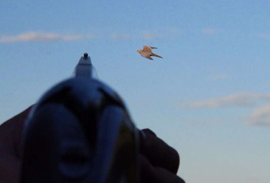 Maintaining a lead is important when shooting doves. Photo by Jerry Neal (CPW)