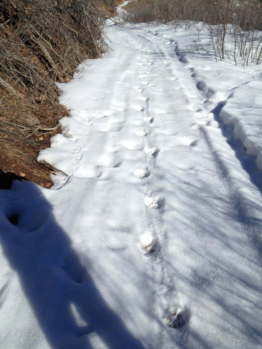 My Lion's tracks