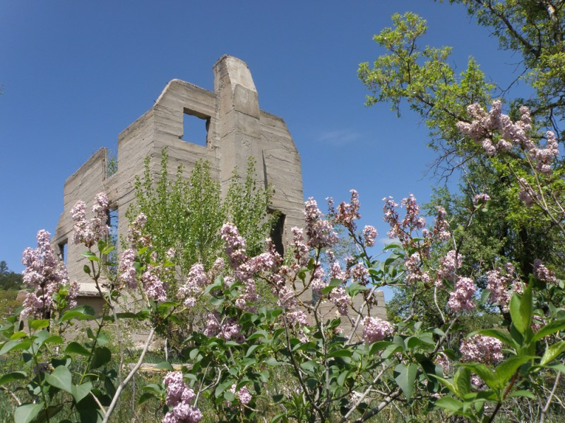 Lilacs bloom in front of the Lucas Homestead at Castlewood Canyon State Park. Photo by © Linda Pohle.
