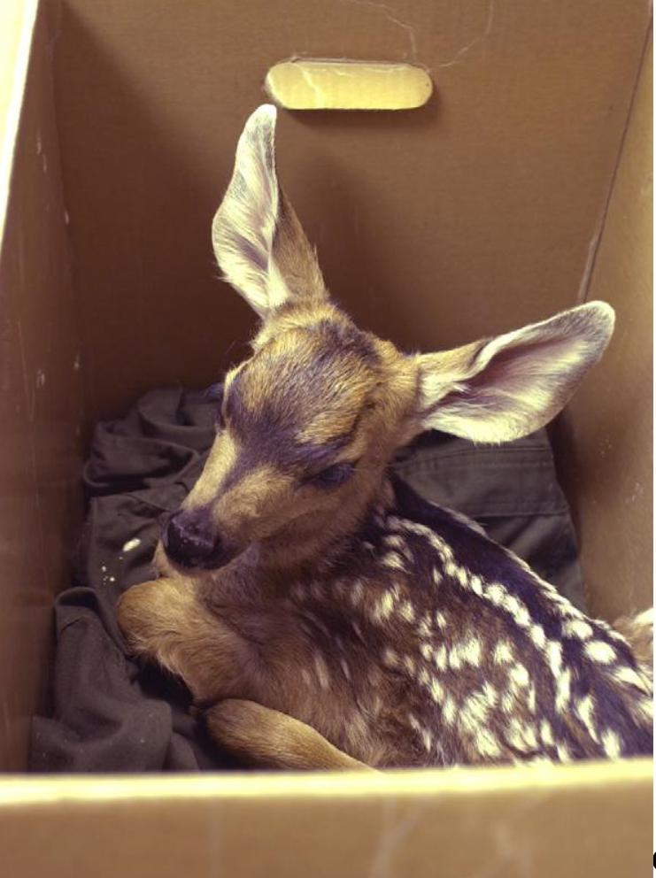 deer for blog