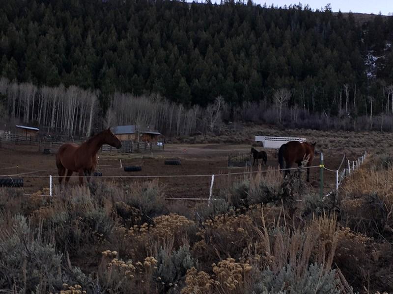 img_2057-horses
