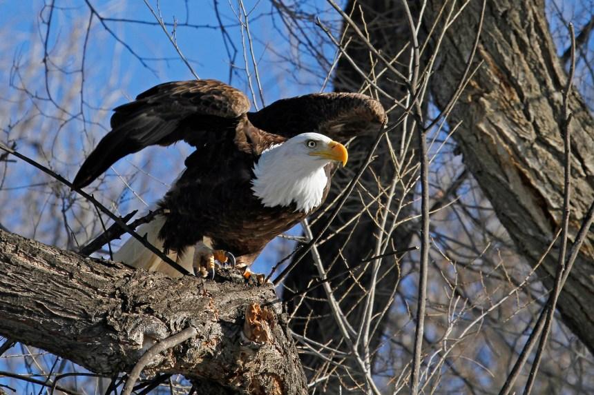 Colorado State Parks and Wildlife