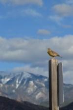Meadowlark-mountain-Wayne-D-Lewis-DSC_1746
