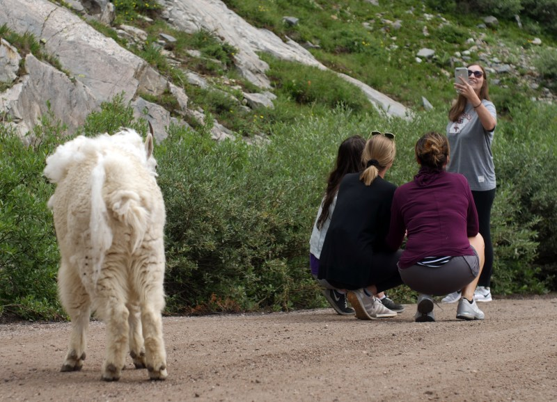 Mountain Goats and People