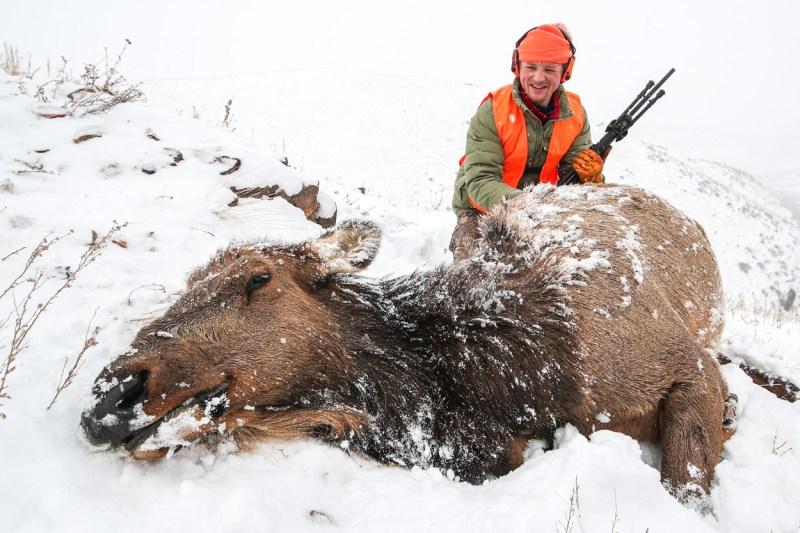 Elk harvested in the snow