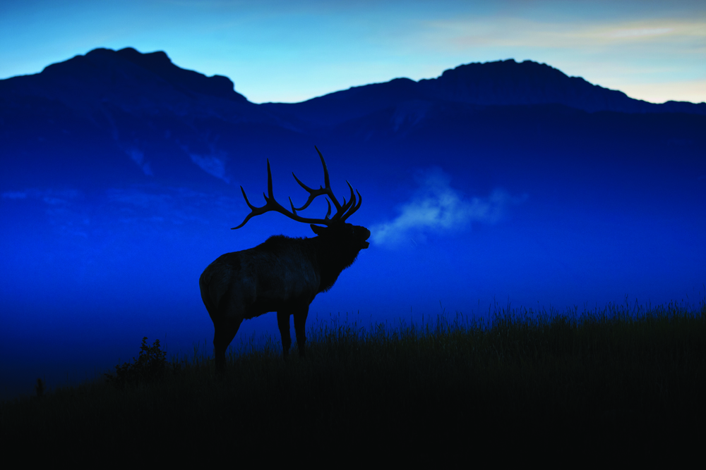 Kings Fall Wallpaper 5 Big Reasons To Hunt Big Game In Colorado Colorado