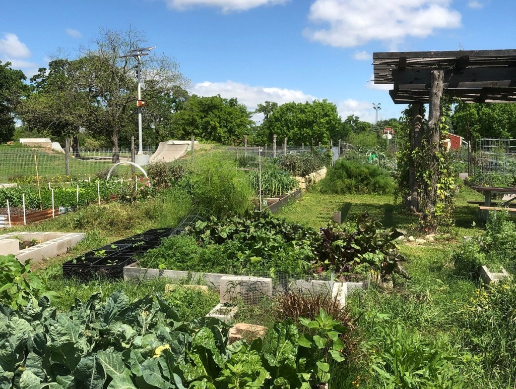 A view of the community gardens in Patterson Park, Austin.