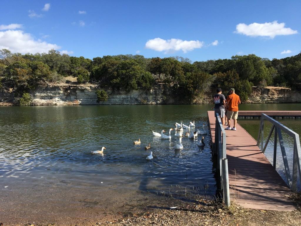 BCRT_loop1_geese