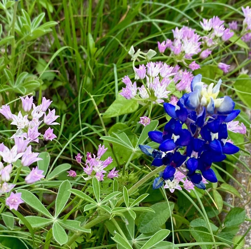 Deb_RoundRock_flowers