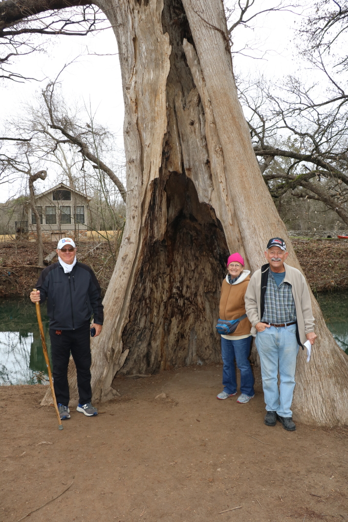 WimberleyWalk-02-26-2021-21 hollow tree