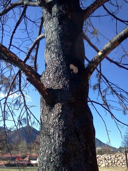 Colorado Wildfire Mantles