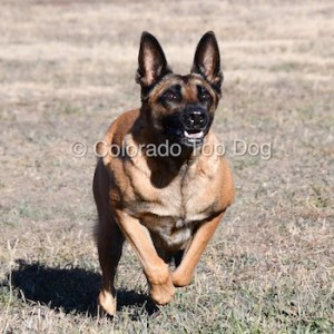 Rescue Dog Rehabilitation