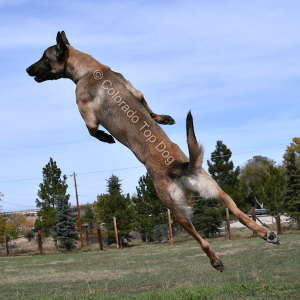 Lone Tree Dog Training