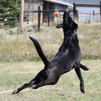 Dog Equipment Recommendations