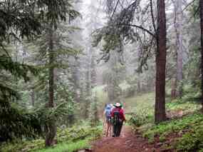 group hiking in deep forest