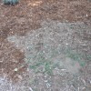Weeds in thin wood mulch