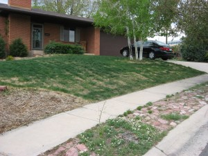 Thin Lawn in Spring