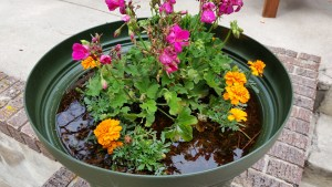 nAnnual Flower Pot with Standing Water