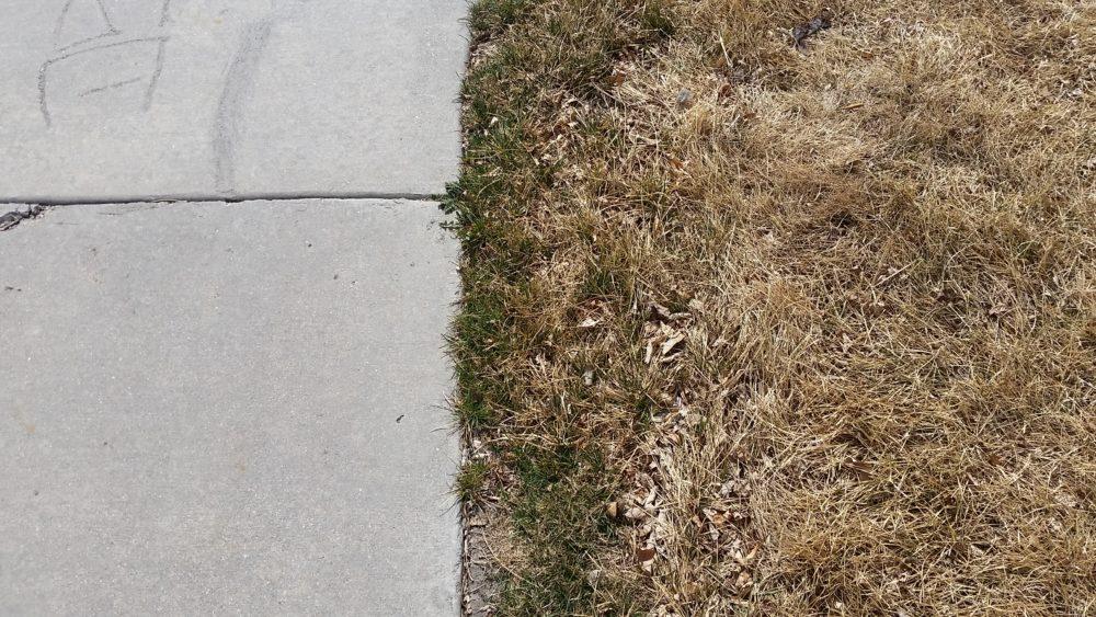 Grass Next to Sidewalk