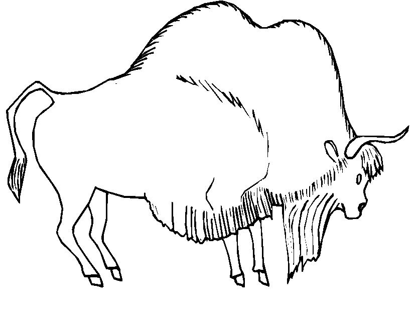 Animali Foresta 25, Disegni per bambini da colorare