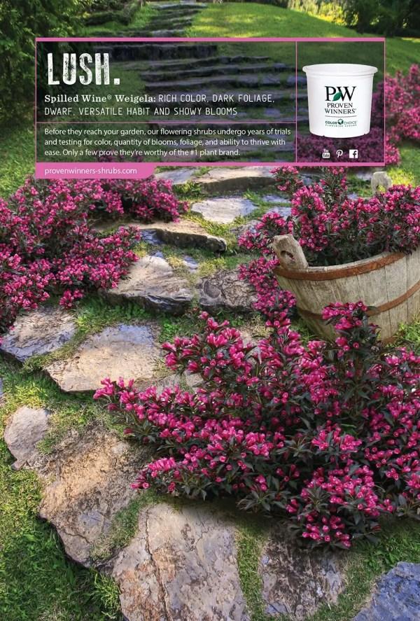 proven winners flowering shrubs
