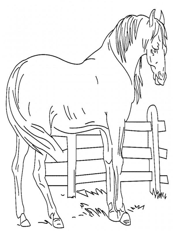 Dibujos Para Colorear Vacas