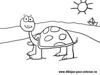 Tortugas para colorear   Colorear imgenes