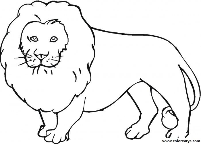 Dibujos de leones salvajes para imprimir y pintar