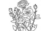 Dibujos originales para colorear el 8 de marzo Da ...